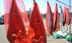 말린연어 상품 이미지