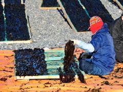 자연산돌미역 상품 이미지