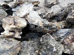 섬마을 생굴(자연산) 상품 이미지