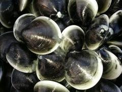 흑모시조개 상품 이미지