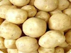 감자 상품 이미지