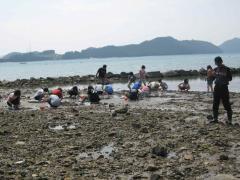 갯벌바지락캐기체험