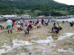 갯벌체험-바지락캐기