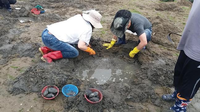 갯벌조개캐기체험