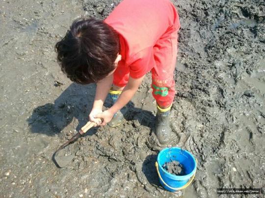 조개잡이 갯벌체험