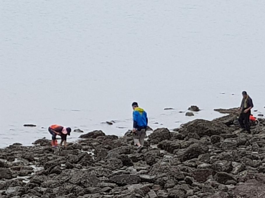 갯바위 생태체험