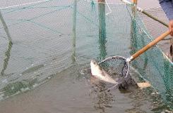 숭어잡이체험 1번째 이미지