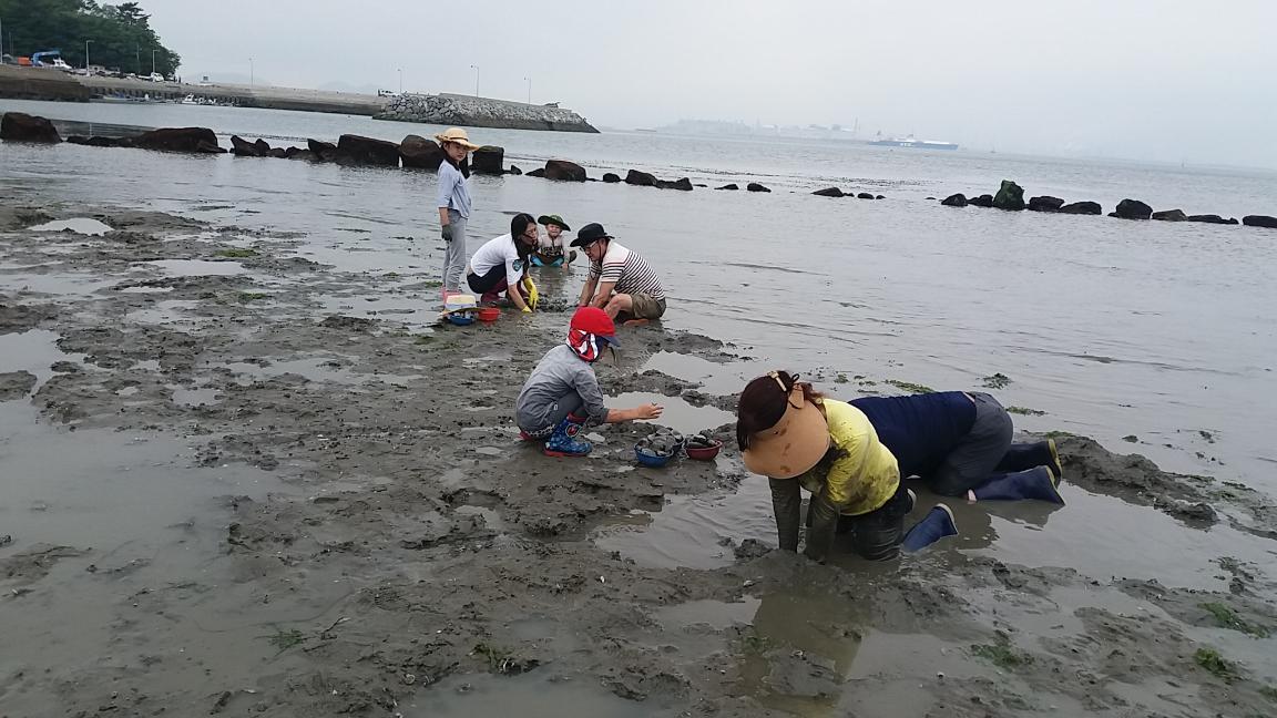 갯벌조개캐기체험 2번째 이미지