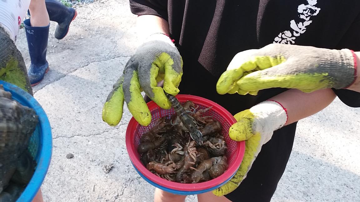 갯벌조개캐기체험 5번째 이미지