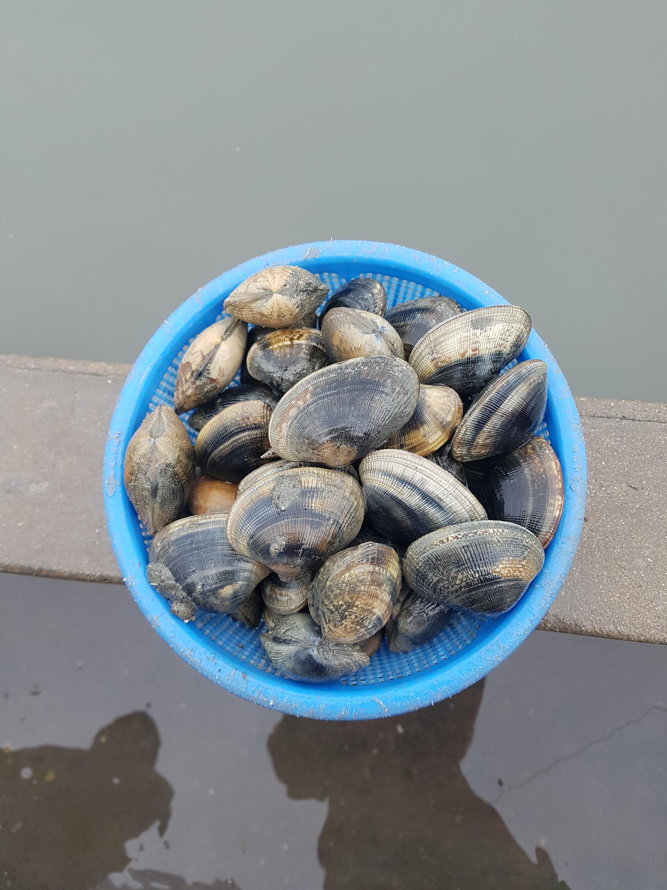 갯벌체험(쏙잡이, 바지락, 우럭조개) 2번째 이미지